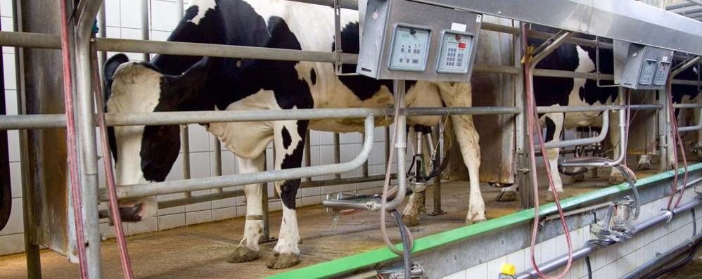Prezzo del latte, i produttori sperano «Impossibile resistere per molto»