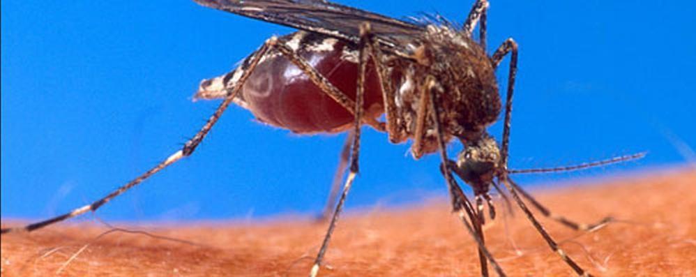 Zanzare, un vero e proprio flagello L'appello: «Il Comune ci dia una mano»