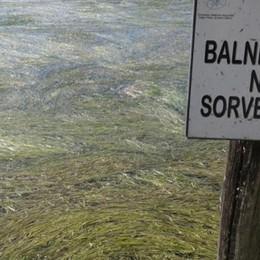Alghe record e crolla il livello del lago   Mazzata per il turismo a Sarnico