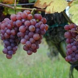 Cantine aperte con «Andar per vigne»