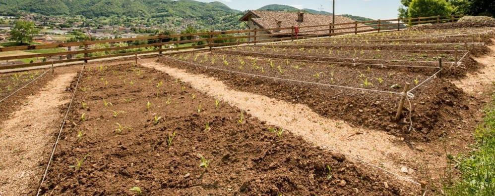 Orto ricco e sostenibile: ecco il corso di biointensivo domestico