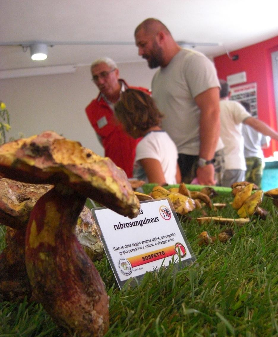 Funghi in mostra