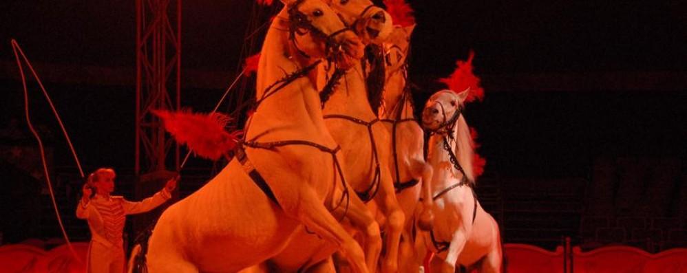 «No al circo con gli animali» Sabato presidio in via Lunga