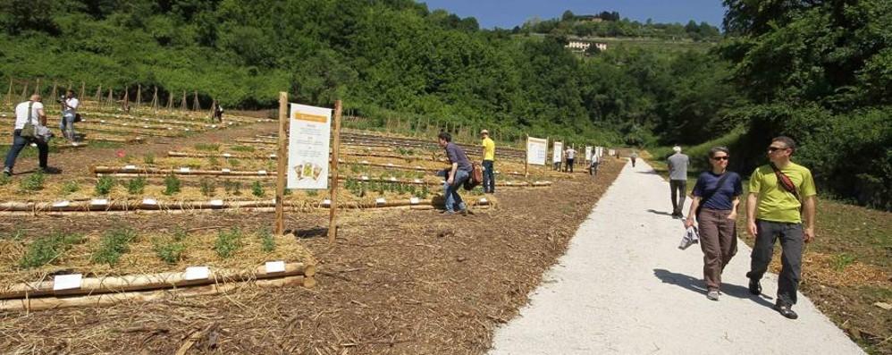 Bergamo vince un bando europeo 173 mila euro per l'orto botanico