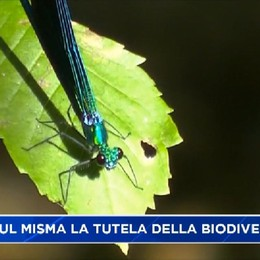 Oasi WWF di Valpredina - Sul Misma per la salvaguardare la biodiversità