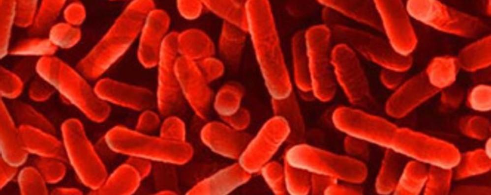 Zingonia, Legionella al Policlinico Segnalate due morti sospette