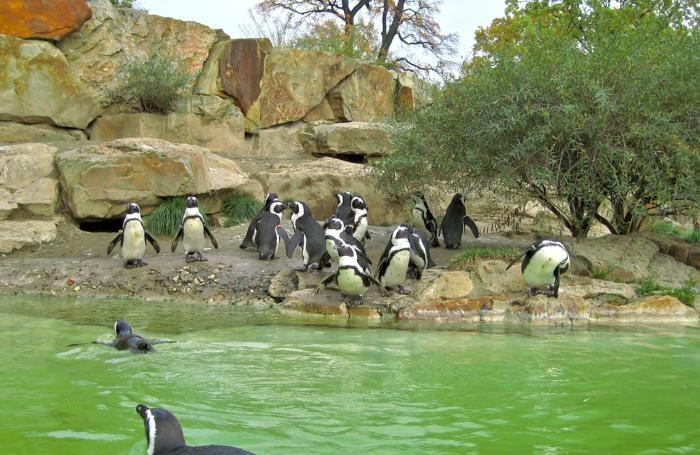 Il Giardino zoologico di Berlino
