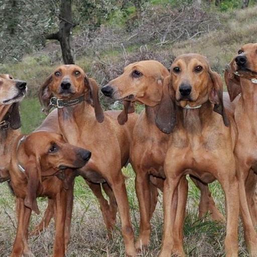 scopri i 10 cani più belli del mondo» attenzione al link truffa su