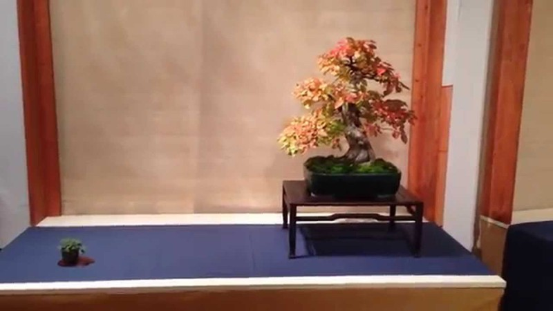 BONSAI IN ACCADEMIA