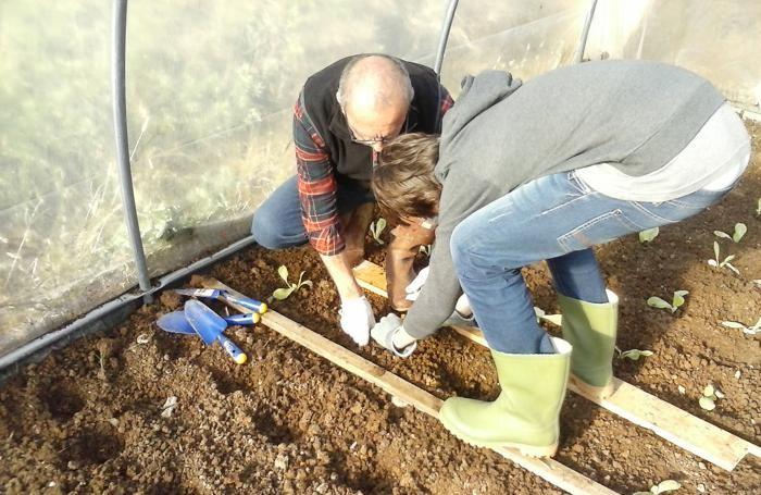 bambini al lavoro in serra a Scanzorosciate