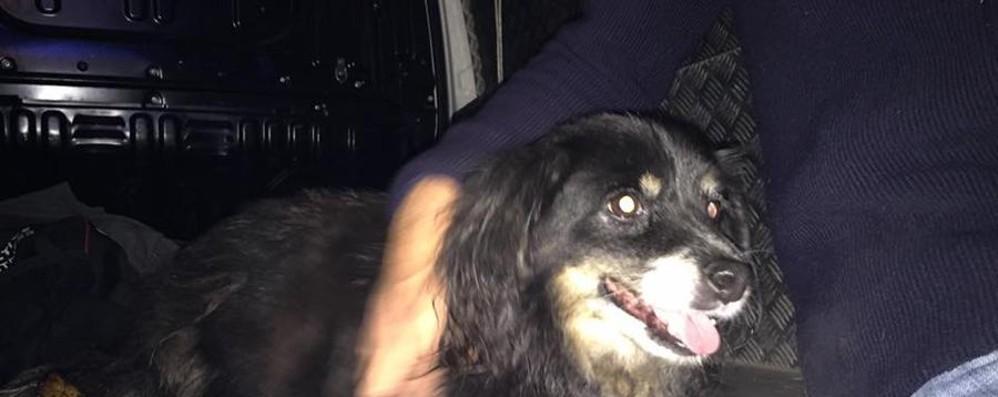 Vagavano di notte sull'asse interurbano I cani sono stati riconsegnati ai proprietari