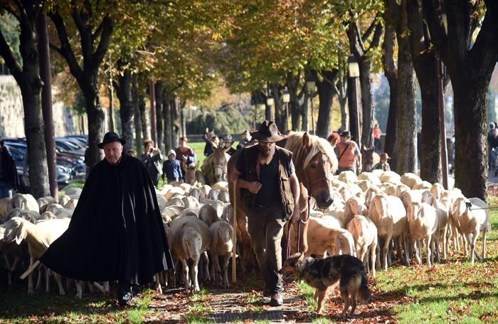 I pastori sulle Mura