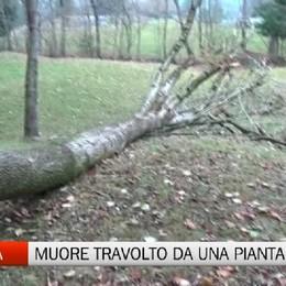 Dorga di Castione, muore travolto da un albero