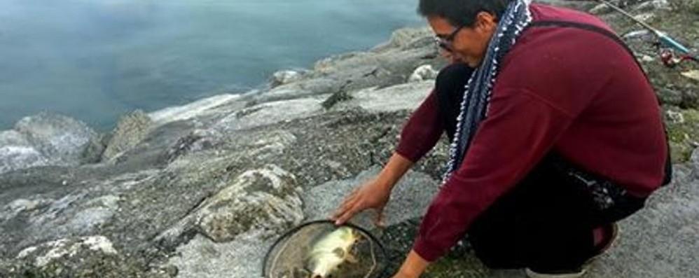 La carpa (giovane) di Ismaele  il pescatore dal cuore d'oro