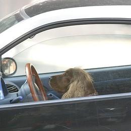 Aiuto! Il cane mi ha chiuso fuori dall'auto Serina, surreale telefonata ai pompieri
