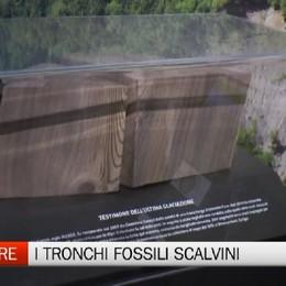 Vilminore, alla scoperta dei tronchi fossili