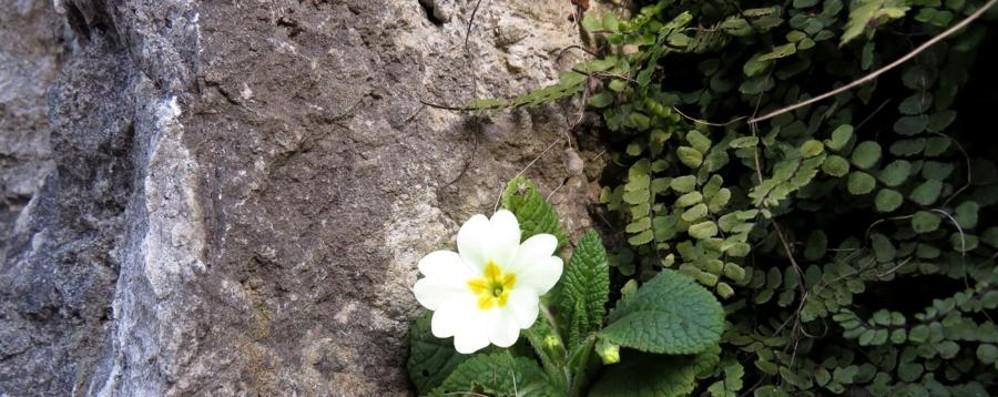 Fino a 17 gradi, piante ingannate Allarme Coldiretti: «falsa primavera»