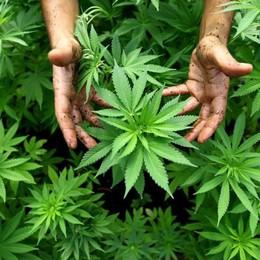 Dalla Lombardia alla Sicilia  Arrestato con 18 chili di marijuana