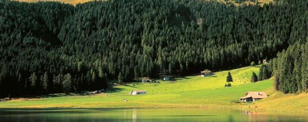 Si cercano dieci operai agricolo-forestali Contratto a tempo determinato in Ersaf