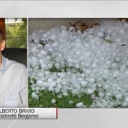 Clima e agricoltura: i danni dei nubifragi