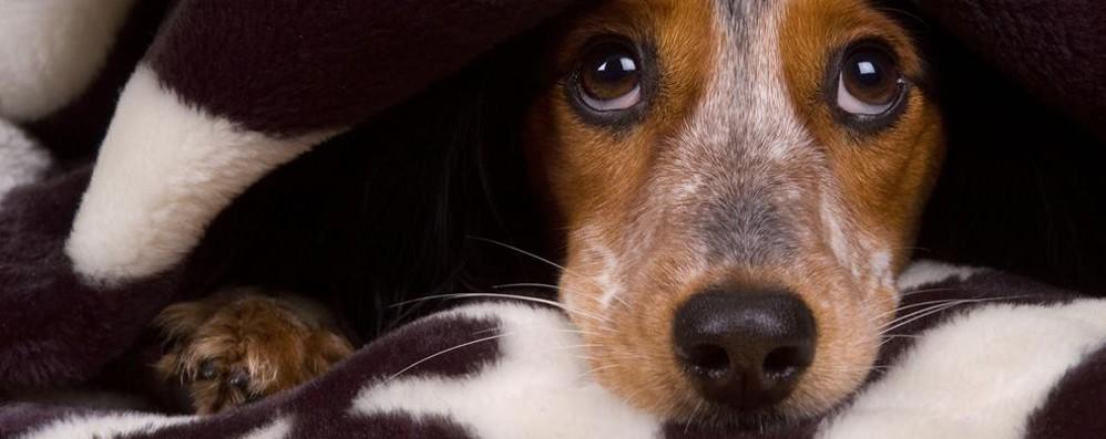 Cani e botti di fine anno Ecco i consigli dell'esperto