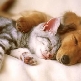 «Cani e gatti negli ospedali  È una battaglia di civiltà»