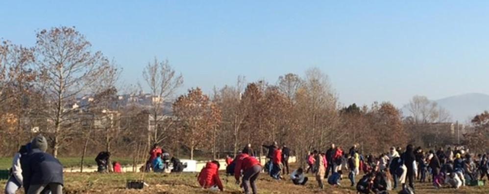 Bergamo avrà 150 nuovi alberi - video  All'ospedale li piantano i bambini