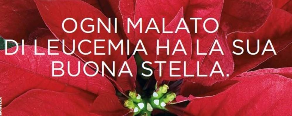 Prezzo Stella Di Natale Ail.Una Stella Di Natale Contro La Leucemia Dall 8 All 11 Dicembre Ecco