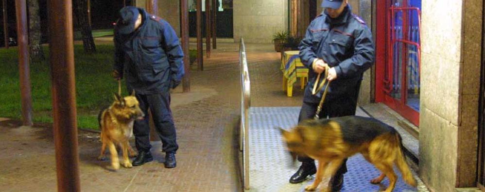 I cani fiutano droga, due arresti a Barbata Trovate dosi di cocaina: 1 anno e 4 mesi