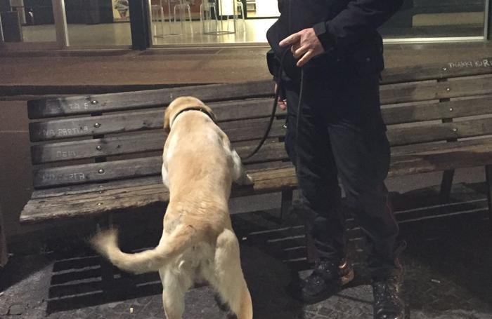 Controlli dei carabinieri con i cani antidroga