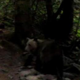 Pastori e orso: nemici a vita? Un progetto per ridurre i rischi