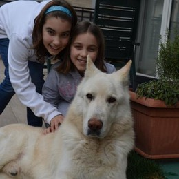 Duke, il cane sentinella di Treviolo Scopre due ladre e le fa scappare
