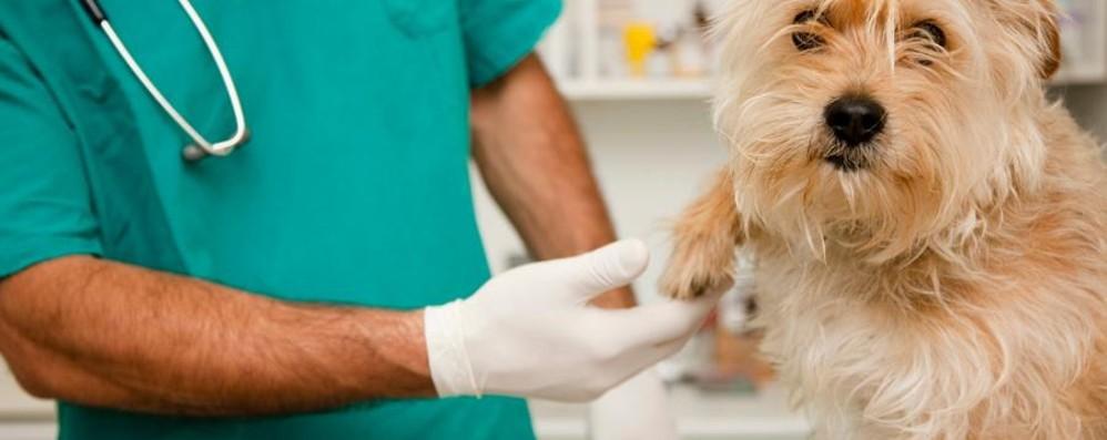 «Non è un cristiano, ma un cane» E i vigili multano una veterinaria