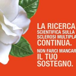 Una gardenia contro la sclerosi Volontari in campo a Bergamo
