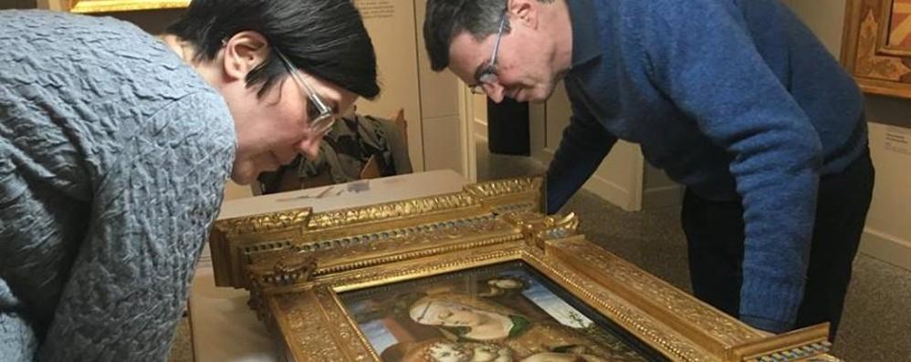 Da Londra all'Accademia Carrara Ecco la Madonna con bambino di Crivelli