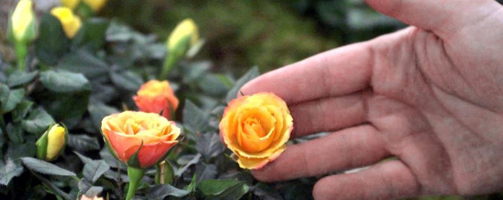 Sul Sentierone è primavera con la fiera dei fiori