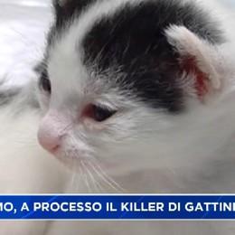 Trescore. Killer di gattini a processo