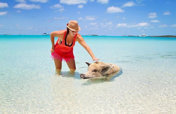 Pig Beach (Great Exuma, Bahamas) - Biglietti, foto e indirizzo