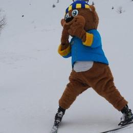 Avvistato un orso a Foppolo Porta gli sci e fa giocare i bambini