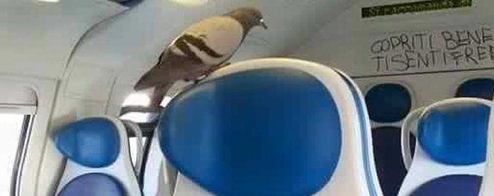 Trova l'intruso nella carrozza... Un piccione «viaggiatore» prende il treno
