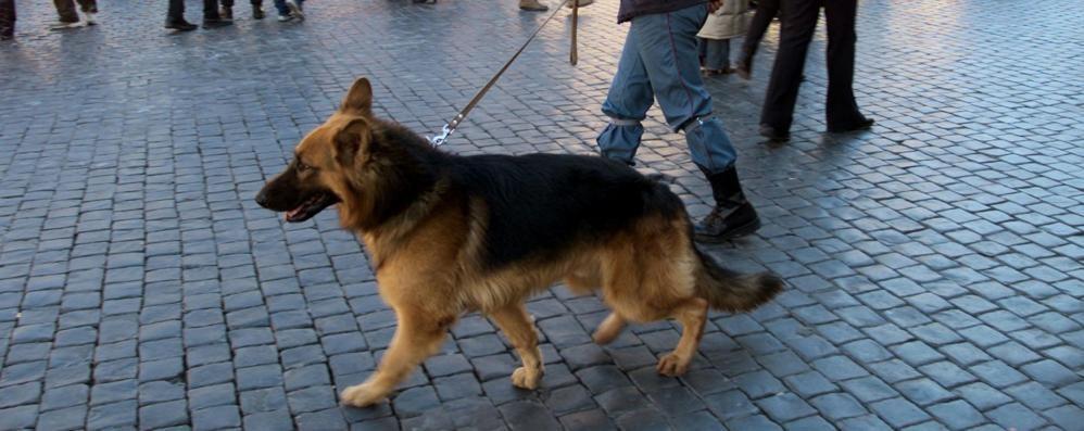 Sgominato traffico di stupefacenti In azione i cani antidroga di Bergamo