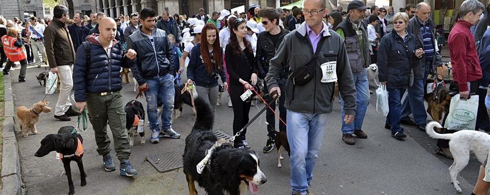 Arriva la Corri Dog, pronti a fotografare Scatta un selfie con Fido e invialo a L'Eco