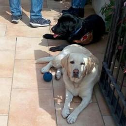 Cane guida perde la vista La storia di Penelope & Spritz