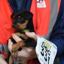 Oltre 500 per la Corri Dog - le immagini Ecco le foto dei lettori: ne sono arrivate 84