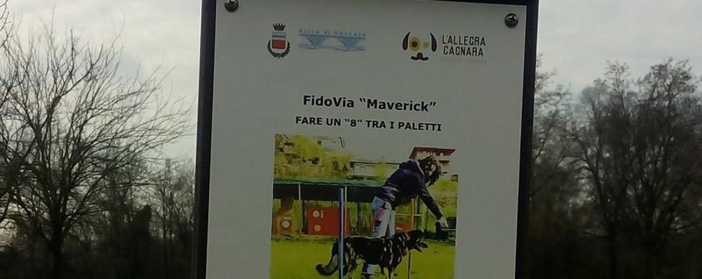 «Percorso vita» per cani a Seriate  Domenica debutta la FidoVia Maverick