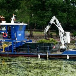 Piano «anti alghe» nel Sebino Sorte  cede: «Paga la Regione»