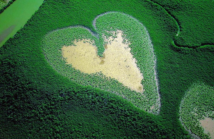 Un cuore tra la vegetazione visto dall'alto: quanto è bella la nostra Terra, da difendere, da noi stessi, e proteggere