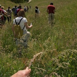 Come riconoscere le erbe spontanee Un incontro a Fiobbio di Albino