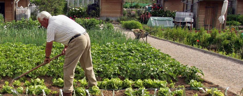 Come coltivare l'orto in due semplici lezioni