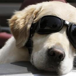 Cani in aereo? Mai più nella stiva Possono stare a bordo con il padrone